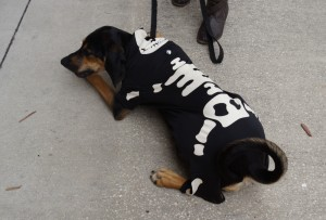 Skeleton Dog Costume Contest at Wag Natural Pet Market 2012